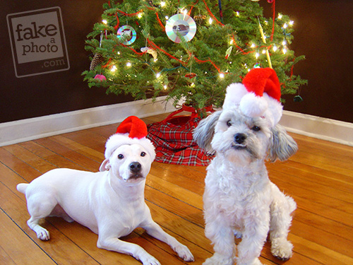 pet christmas card photo retouched