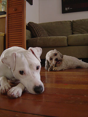 retouch pet portrait photo
